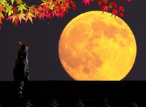 Лунный календарь на сентябрь 2020 года
