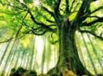 Как отыскать свое дерево?