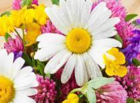 Какие цветы соответствуют вашему знаку зодиака