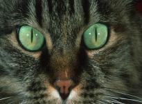 Коты как хорошие экстрасенсы или магия кошек