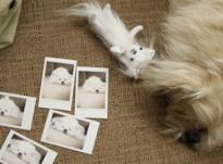 Как защитить свое фото от порчи и сглаза
