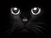 Магические кошки: как домашние любимцы спасают нас от бед