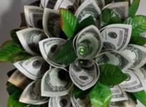 Как сделать денежное дерево из купюр своими руками