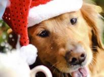 Как правильно загадать желание на Новый год Собаки 2018