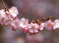Самые благоприятные дни в апреле 2019 года: точные даты, знак Зодиака