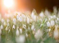 Мартовский рубеж: что важно сделать каждому Знаку Зодиака до 31 марта