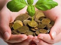 Денежные растения: как привлечь в дом достаток?