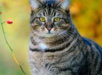 Энергетика полосатых котов: чем они полезны для людей