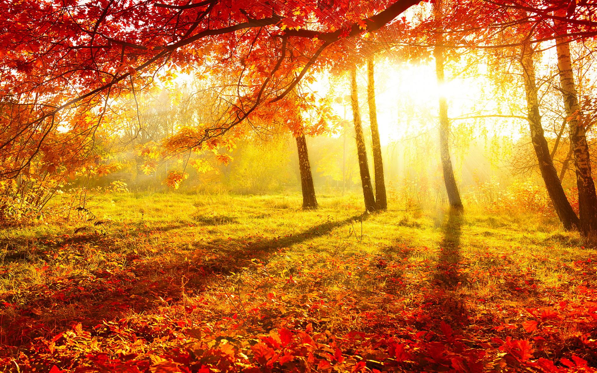 Осенние гадания и обряды - узнаем будущее в домашних условиях
