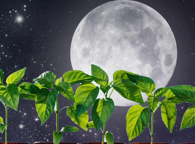 Когда первое Новолуние в январе 2019 года: сильный ритуал на богатство
