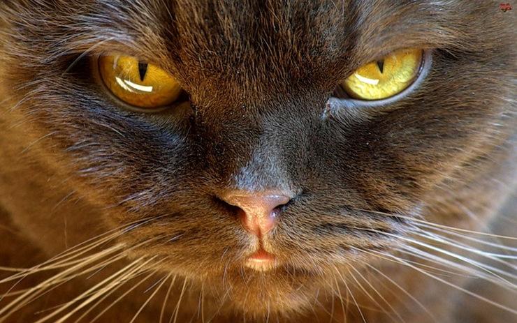 Как понять, что твой кот экстрасенс