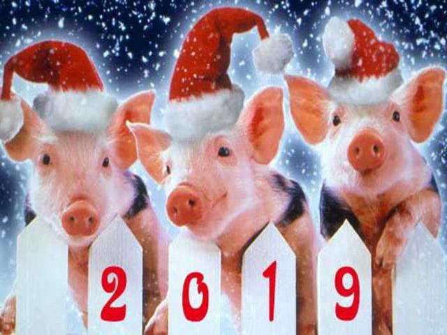 Когда наступит 2019 год Желтой Свиньи?