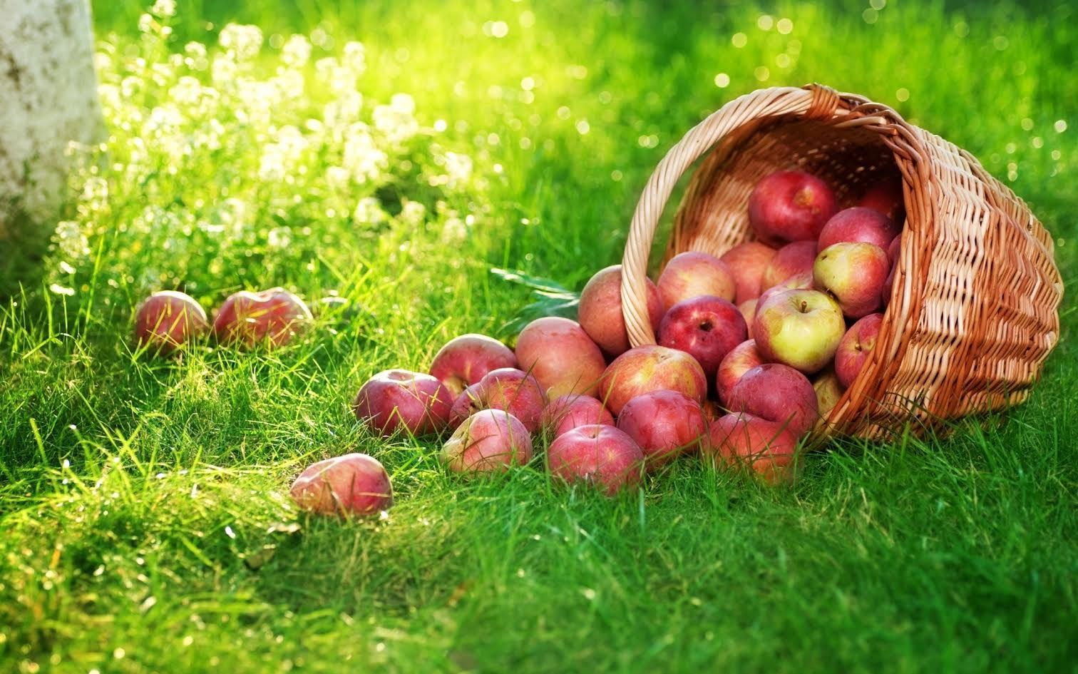 Яблочный Спас 19 августа 2018 года