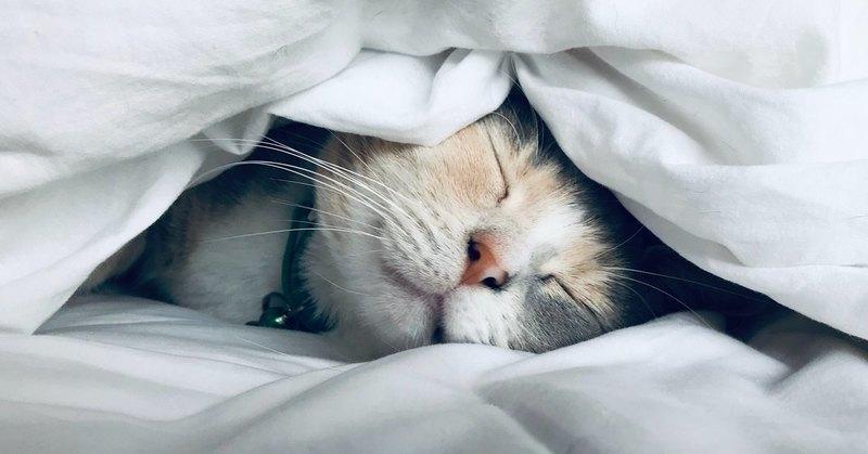 В какую сторону правильно спать головой