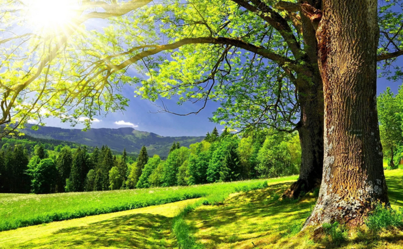 Зов природы: как наполниться силами за лето, чтобы хватило на весь год