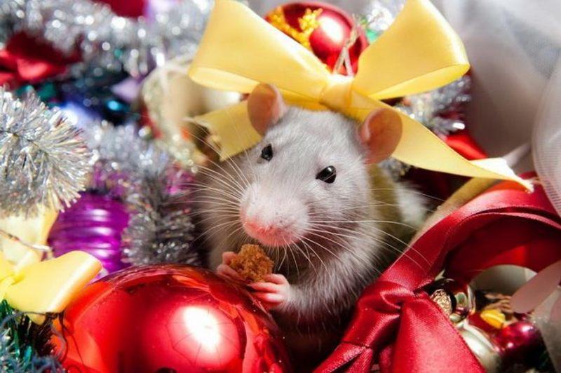 Как встречать 2020 год Серой Металлической Крысы