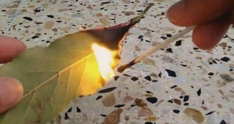 Как правильно жечь лавровый лист на желание