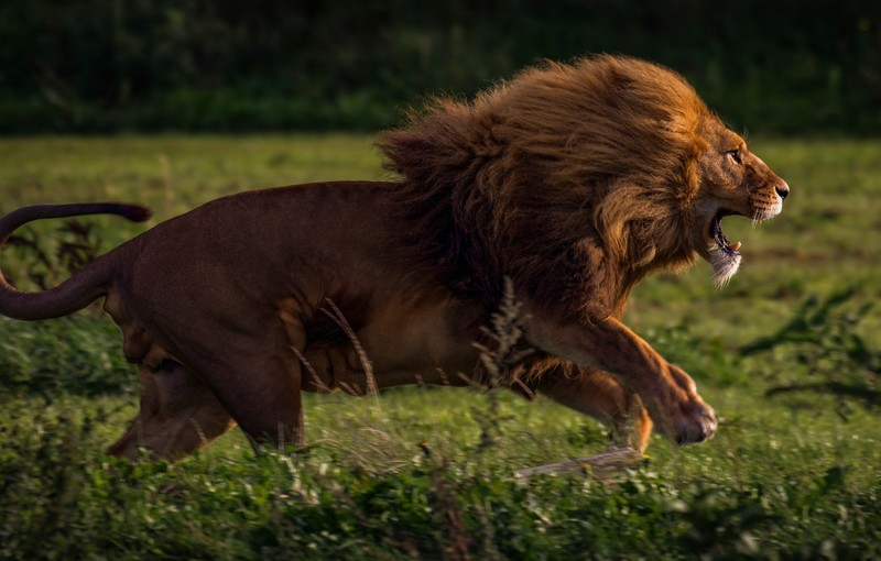Зов жертвы: почему женщина, ищущая сильного мужчину, притягивает «хищников»