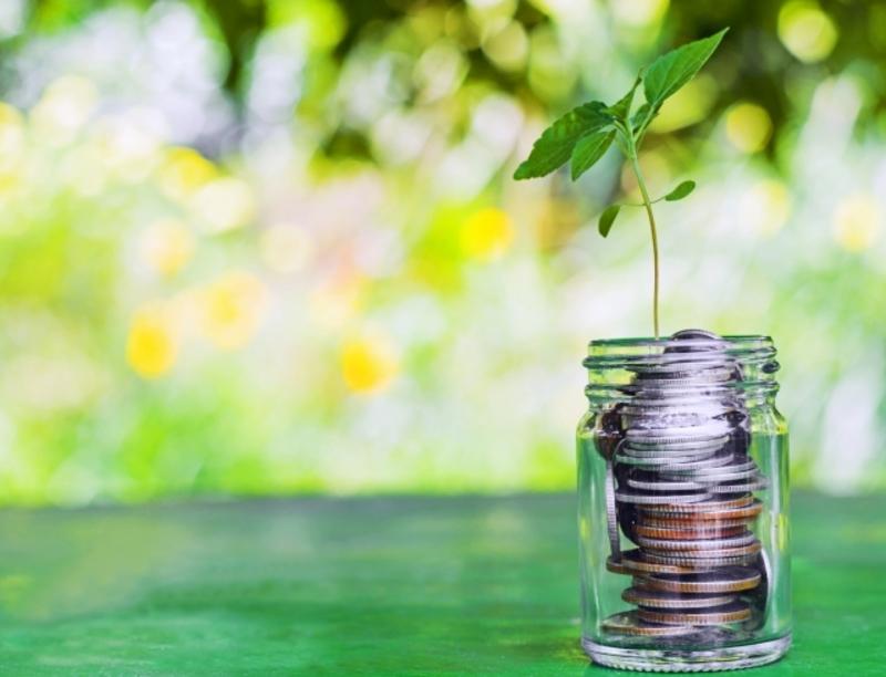 Какие растения приносят деньги и удачу