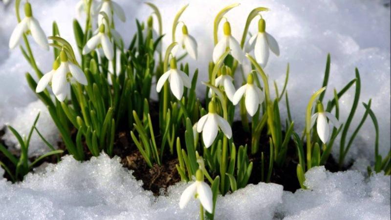 Таро-прогноз на неделю с 9 по 15 марта для каждого знака зодиака