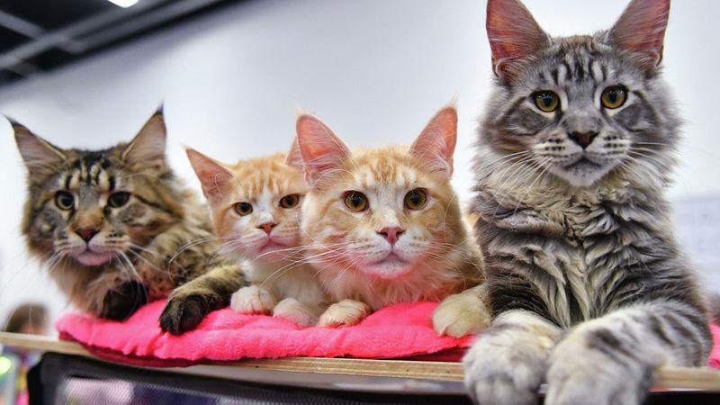 5 денежных примет и поверий о кошках: как домашние любимцы нам подсказывают