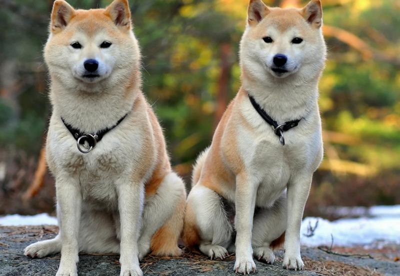 Чем полезна собака в доме: факты и приметы