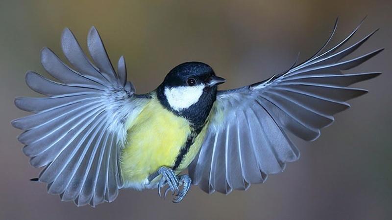 Народные приметы и поверья о птицах