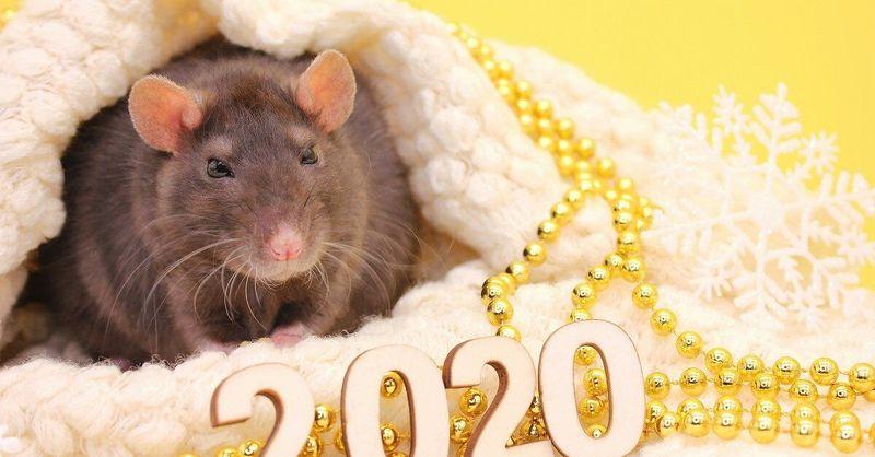Любовный гороскоп на 2020 год  Крысы для всех знаков Зодиака