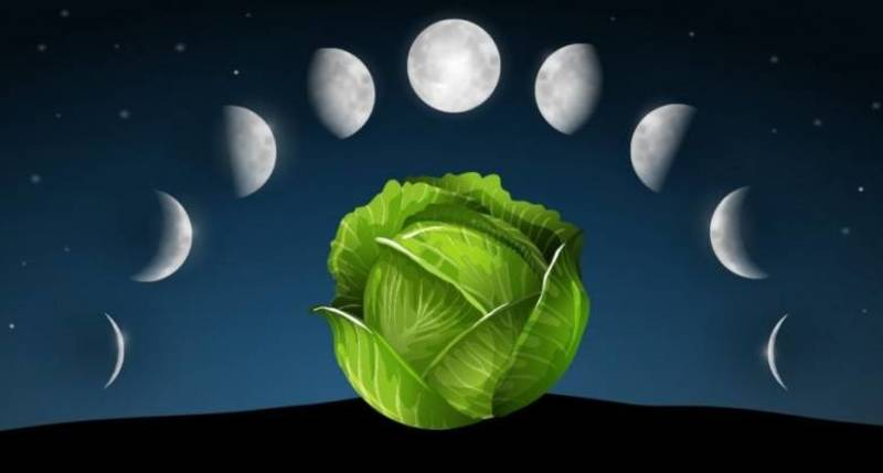 Лунный посевной календарь на 2020 год: таблица, фазы Луны Полнолуние и Новолуние