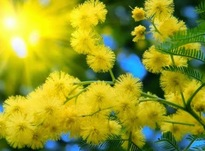 Сегодня праздник весны 8 марта 2019 года: что нельзя делать в этот день